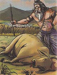 Sage Gautama killed a cow