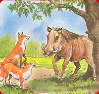 the boar and the foxes