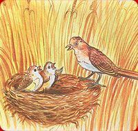 the larks in the cornfield