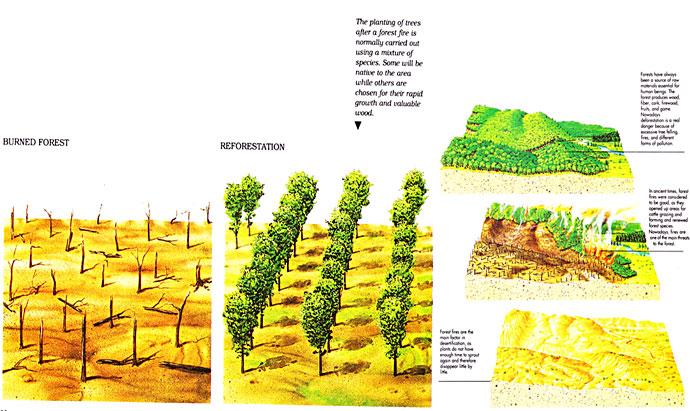 Reaction paper for deforestation